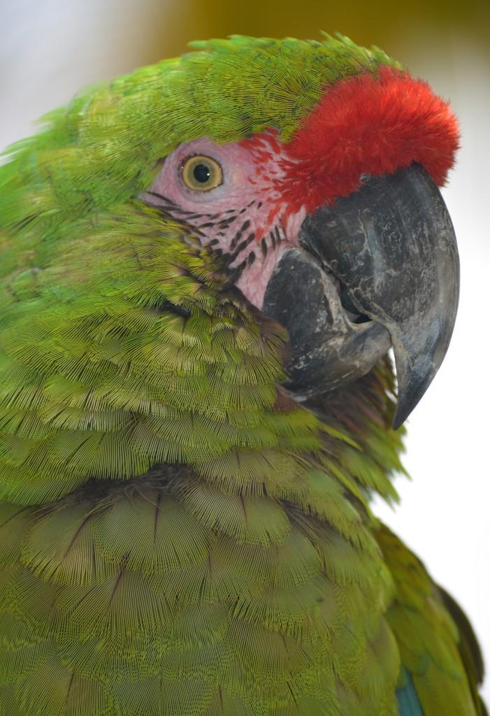 Pretty-Parrot